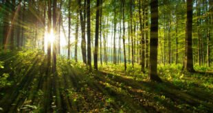 Inteligencia artificial en la conservación de bosques