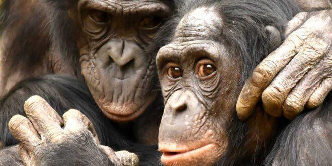 Desarrollan tecnología para identificación individual de primates