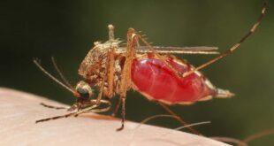 Identifican mosquitos de malaria y otras enfermedades, con inteligencia artificial