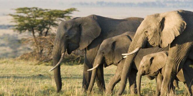 Conservacionistas rastrean las poblaciones de elefantes desde el espacio utilizando satélites de observación de la Tierra e IA