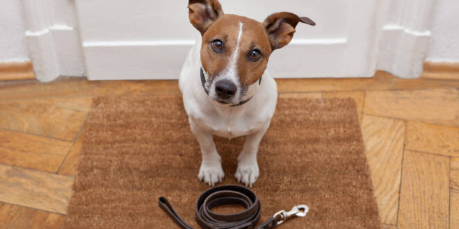 """El collar inteligente Petpuls puede """"traducir"""" el ladrido de tu perro"""