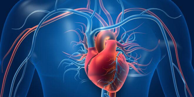 Predicen el riesgo cardiovascular con inteligencia artificial