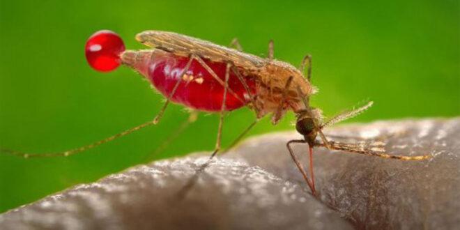 Zzapp Malaria, startup israelí, crea aplicación para combatir la malaria