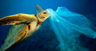 Universidad de Barcelona desarrolla algoritmo para detecta plásticos en el oceáno desde el aire
