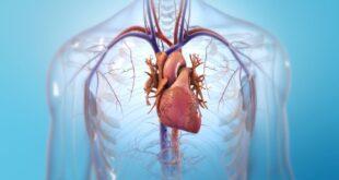 Aprendizaje profundo permite exploraciones cardíacas más seguras